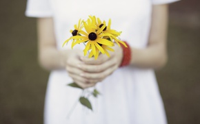 Picture girl, flowers, a bunch