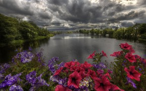 Picture clouds, trees, landscape, sunset, flowers, river, shore