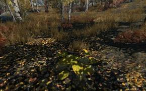 Picture grass, trees, pumpkin, grass, trees, skyrim, elder scrolls, tes 5