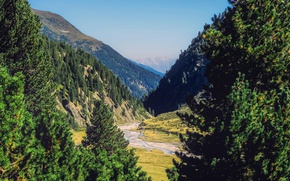 Picture forest, trees, mountains, Austria, valley, gorge, river, Sunny