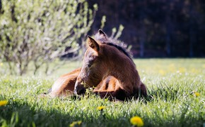 Picture Nature, Horse, Baby, Stay