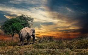 Picture elephant, Thailand, animal