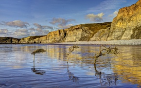 Picture trees, rocks, coast, Wales
