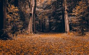 Wallpaper autumn, nature, Park