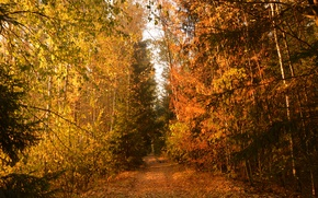 Picture Path, Autumn, Trees, Forest, Trail, Fall, Autumn, Colors, Forest, Path