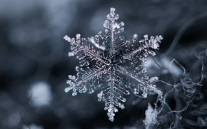 Picture macro, background, snowflake