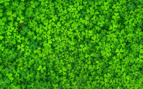 Picture Green, Leaves, Clovers