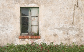 Picture house, flowers, garden, window, abandoned