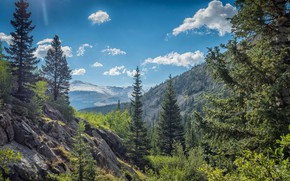 Picture trees, mountains, valley, Colorado, Colorado, Rocky mountains, Rocky Mountains