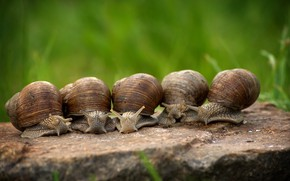 Picture Snails, Clam, Bypass, Shell, Slowly