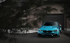 Picture BMW, Blue, Predator, F80, Sight