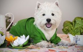 Picture flower, dog, costume, Puppy, Baby
