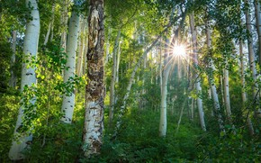 Wallpaper forest, the sun, nature, spring