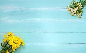 Picture flowers, background, Daisy, chrysanthemum, wildflowers