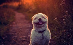 Picture language, background, sweetheart, dog