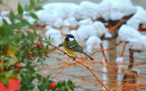 Picture Winter, Snow, Bird, Winter, Snow, Bird