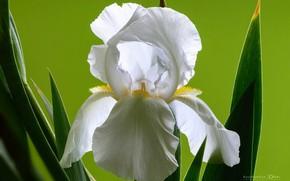 Picture macro, spring, iris