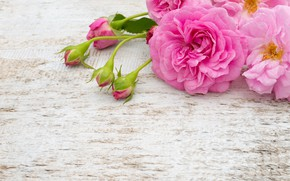 Wallpaper buds, pink, roses, pink, white, roses, bouquet, bud, flowers, flowers