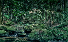 Picture greens, forest, trees, stream, stones, moss, HDR, jungle, Australia, the bushes, Strickland State Forest