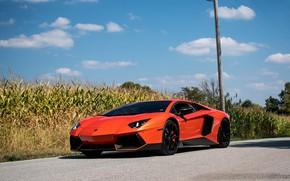 Picture Lamborghini, Orange, Aventador, Cornfield