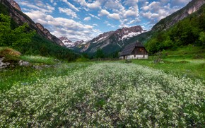 Picture flowers, mountains, house, valley, meadow, Slovenia, Slovenia, The Julian Alps, Julian Alps, Latest Trent valley