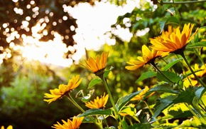 Picture summer, the sun, flowers, bright, Blik