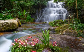 Picture forest, landscape, flowers, river, rocks, waterfall, summer, Thailand, forest, tropical, river, landscape, flowers, beautiful, waterfall, …