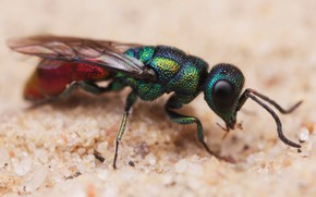 Picture sand, eyes, macro, background, OSA, blur, insect, brilliant, bestanca