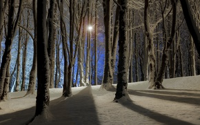 Picture Nature, Winter, Night, Trees, Snow, Branches, Light, Lantern, Shadow