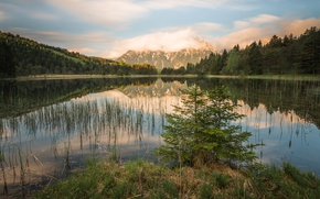 Picture forest, the sky, grass, clouds, landscape, mountains, nature, lake, reflection, hills, shore, vegetation, beauty, spruce, …