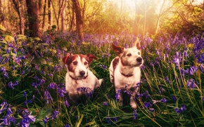 Picture dogs, flowers, spring