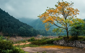 Picture forest, trees, mountains, fog, Vietnam
