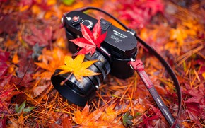 Wallpaper nature, camera, leaves, Harmony, Autumn