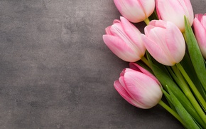 Picture flowers, bouquet, tulips, pink, fresh, pink, flowers, beautiful, tulips, spring