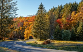Picture autumn, nature, beauty