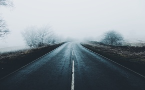 Picture frost, road, trees, fog