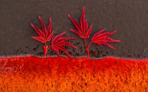 Picture leaves, background, color