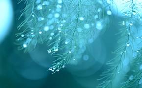 Picture drops, macro, rain, plant, rain, macro, drops, plant
