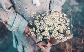 Wallpaper girl, chamomile, flowers