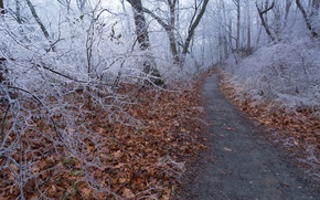 Picture road, forest, trees, nature, ice