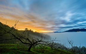 Wallpaper fog, lake, the evening, sunset
