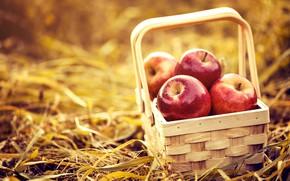 Wallpaper basket, hay, apples, background, nature