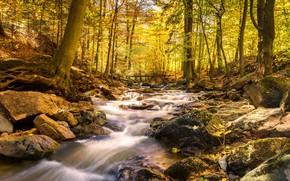 Picture autumn, forest, trees, Park, river, stream, stones, the bridge