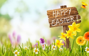 Wallpaper the sky, grass, the sun, flowers, basket, spring, Easter, flowers, daffodils, spring, Easter, eggs, decoration, ...