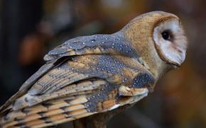 Picture owl, bird, bokeh, by Nushaa