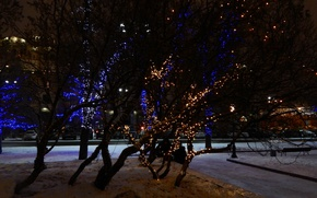 Picture trees, night, lights, beautiful, Moscow, Red square, garland