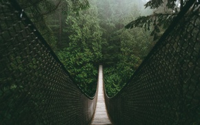 Wallpaper nature, forest, bridge