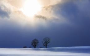 Picture winter, snow, night