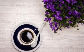 Picture flowers, coffee, spoon, drink, flowers, drink, coffee, spoon