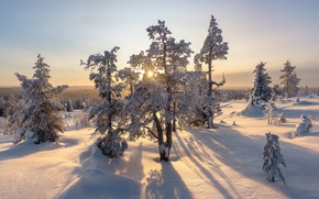 Picture winter, snow, Finland, Finland, Akaslompolo, Freestyle Music Fur